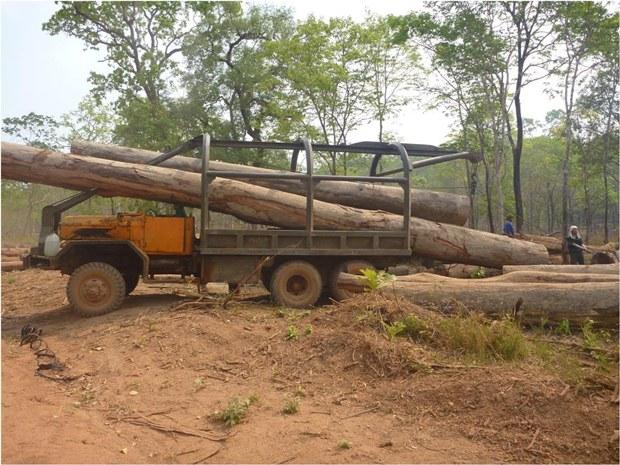 laos-vietnamese-truck-loads-timber-nov26-2014.jpg