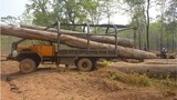 laos-vietnamese-truck-loads-timber-nov26-2014.jpg