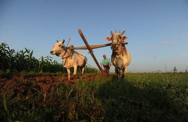 burma-farm-oct-2010.jpg