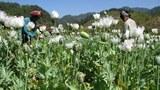 opium-305.jpg