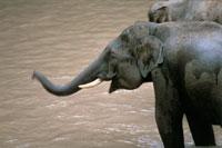 elephants_200.jpg