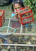 birdflu150.jpg