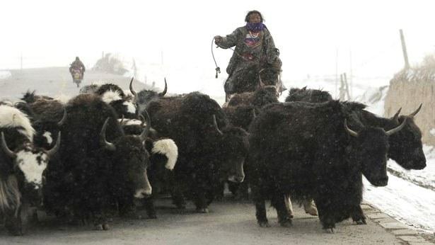 tibet-nomad2-083017.jpg