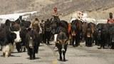 tibet-qinghai-guoluo-herders-2012.jpg