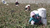 Businesses Must be 'Concerned About Issues Related to Forced Labor': CBP Official on Xinjiang Goods