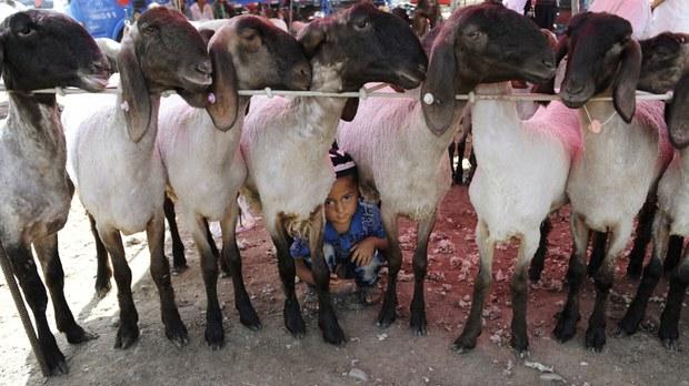 Uyghurs Losing Circumcision Traditions Under China's Xinjiang Policies