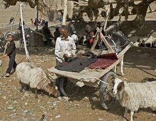 A livestock market in Keriye, Xinjiang, Jan. 7, 2012.