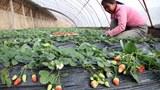uyghur-chinese-farmer-march-2011.jpg