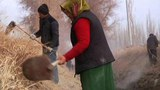 For Xinjiang's Uyghurs, 'Hashar' by Any Other Name Still Means Forced Labor