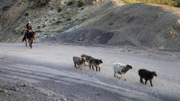 xinjiang-kazakh-herder-june-2017.jpg