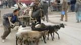 uyghur-farmers-livestock-market-kashgar-305.jpg