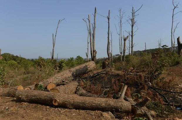 vietnam-deforestation.jpg