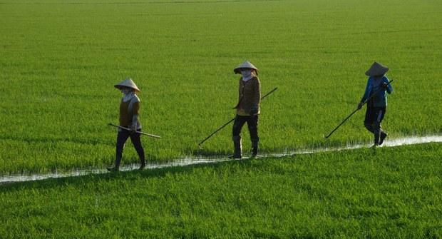 vietnam-mekong-rice-farmers-dec10-2014.jpg