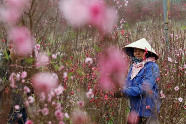 Coronavirus Crushes Lunar New Year's Flower Sales in Vietnam