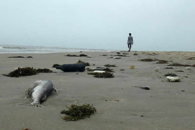 Vietnamese Look at Steel Company as Officials Look for Fish Kill Cause