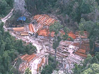 illegal_logging200.jpg