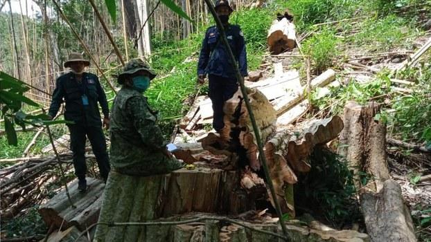 Authorities_inspect_cutting_trees_in_Ohuch_Mondulkiri_062621.jpg
