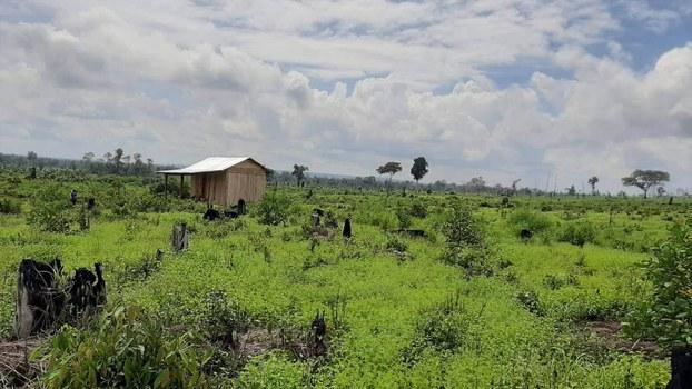CYN_forest_in_Phnom_Ses_12_04_2021_01.jpg
