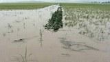 flooded_field_305