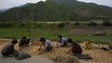 북한 여성들이 도로 위에서 수확한 곡물을 말리고 있다.