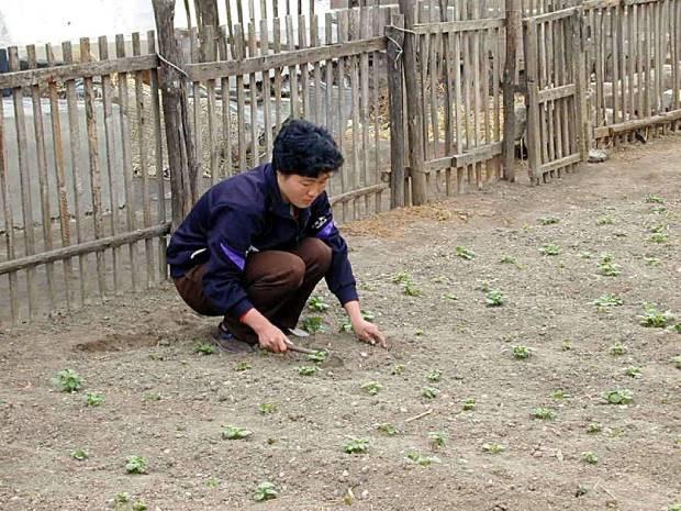 North_Korea_garden_b.jpg