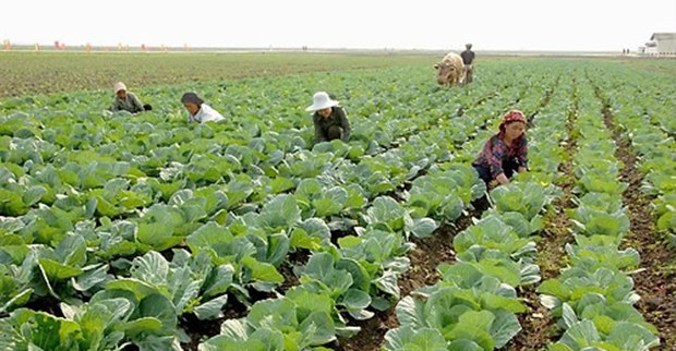 migok_farm_vegetable_b
