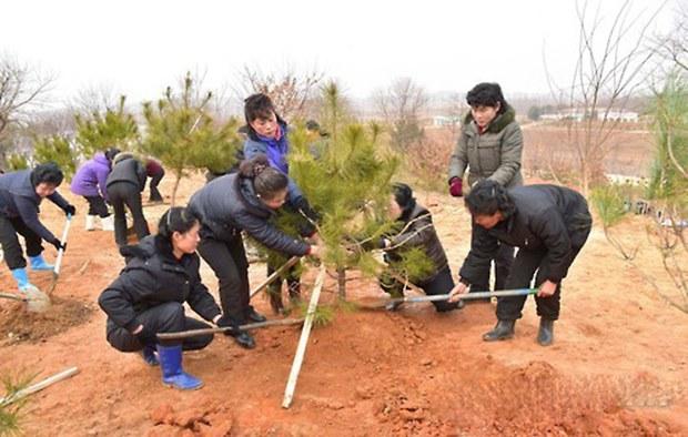 tree_plant_day_b