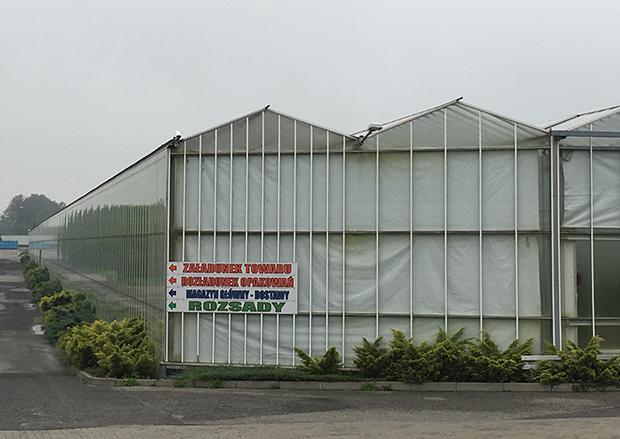 북한 여성 노동자 100여 명이 일하고 있다는 T. Mularski 원예 농장 내부.