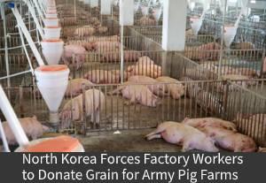 Pig_Farms.jpg