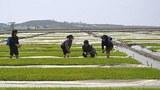 sariwon_migok_farm-620.jpg