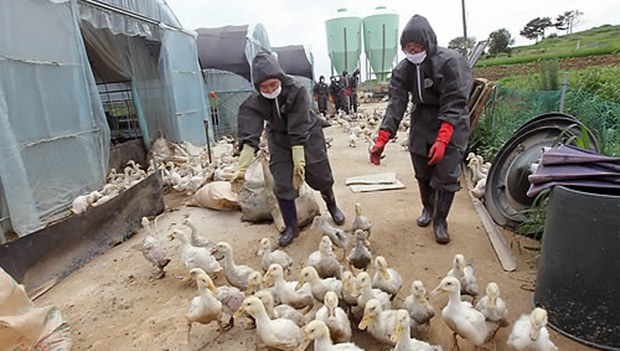 duck_farm_b
