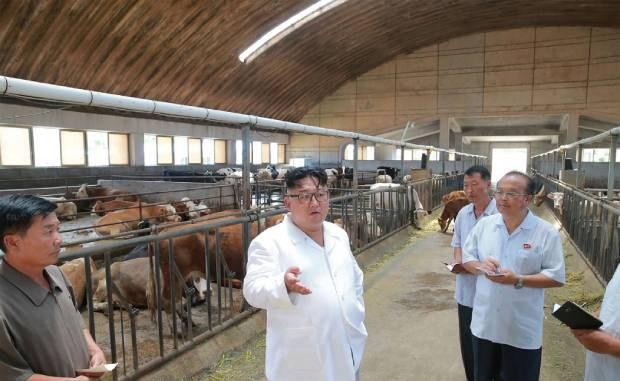 stock_farm_b