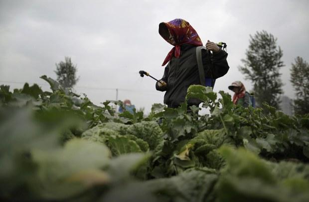 모내기철 북한 농장 비료 수급 악화