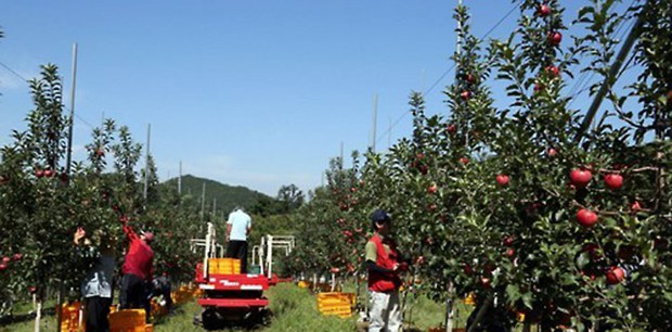 DMZ_apple_picking_b