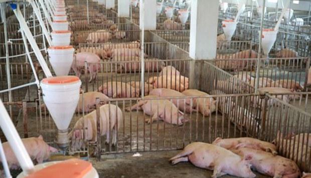 pig_factory_b