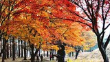 py_fall_tree-620.jpg