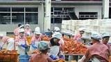 rason_seafood_factory_workers-305.jpg