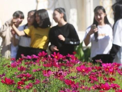 경기도 용인시 에버랜드를 찾은 시민들이 활짝 핀 코스모스를 즐기고 있다.