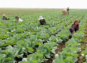 sariwon_farm_crop-305.jpg