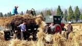 daesung_farm_harvest-620.jpg