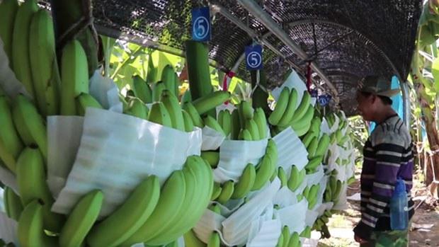 f-banana