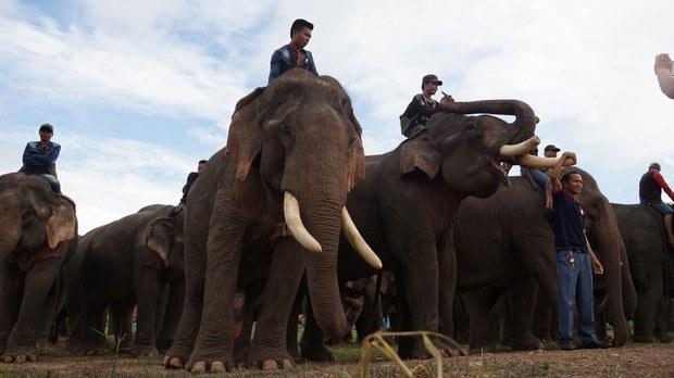 f-elephant