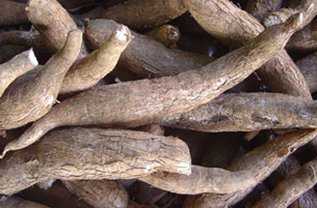 F-cassava