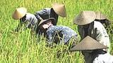 F-LAO-FARMERS