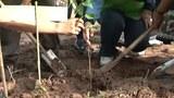 F-Plant-tree