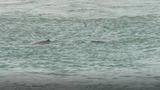 F-dolphin