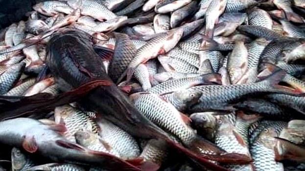 Dead-Fish2.jpg
