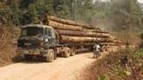F-logging