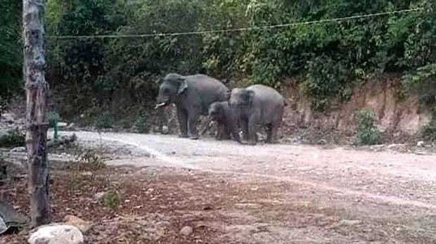 f-wild-elephants
