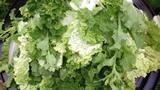 F-Salad